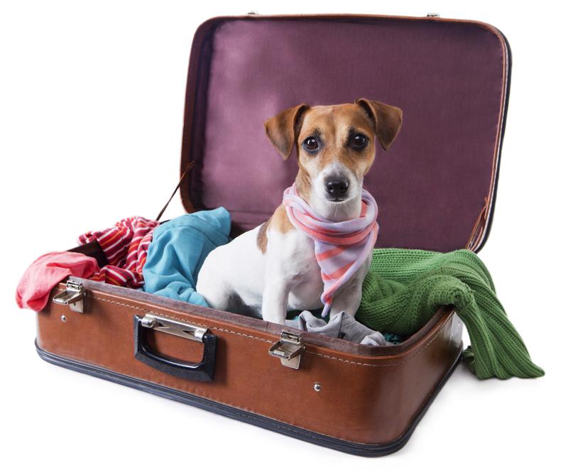 hond_op_reis
